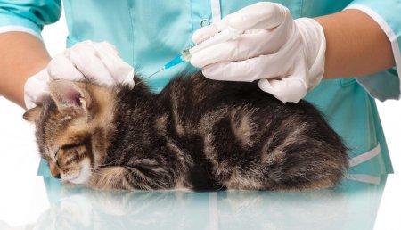 Вакцинация кошек в Москве